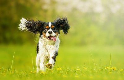 doggy-a